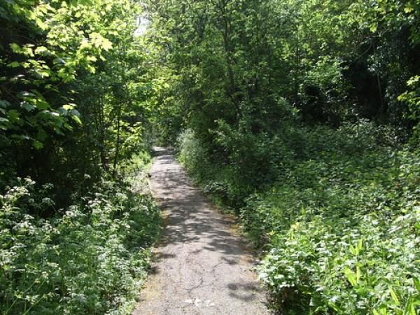 Biggin Wood, Upper Norwood
