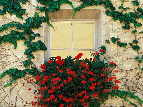 Vines and Flowers, Brixen, Italy