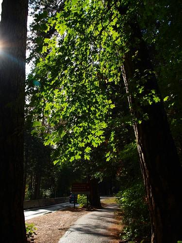 Yosemite Scenes