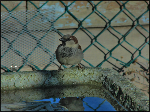 BIrd on the Bath