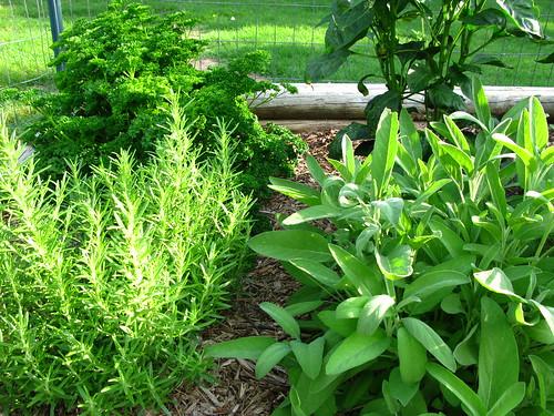 Go green with an herb garden