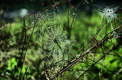Web Redynamix