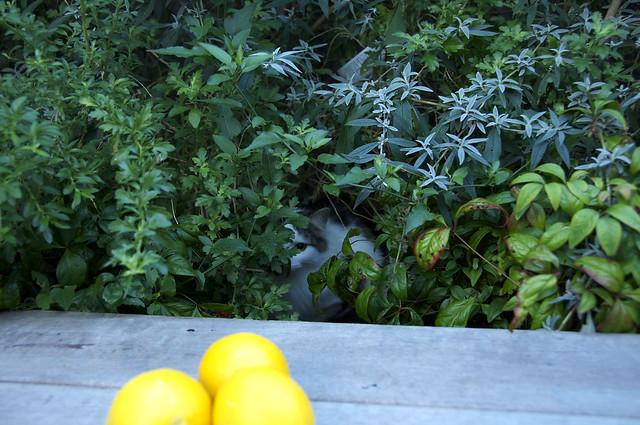 Lemons 02
