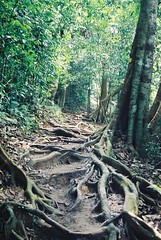 Taman Negara- 2002 (2)