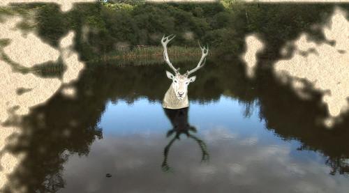 Forest Murmurs (2006)