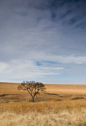 Tallgrass Prairie by you.