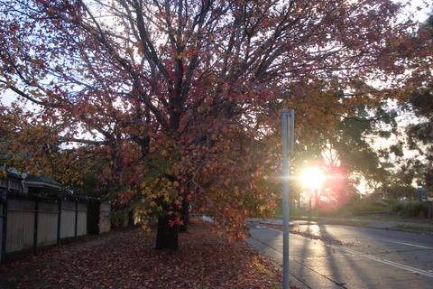 Autumn walk1