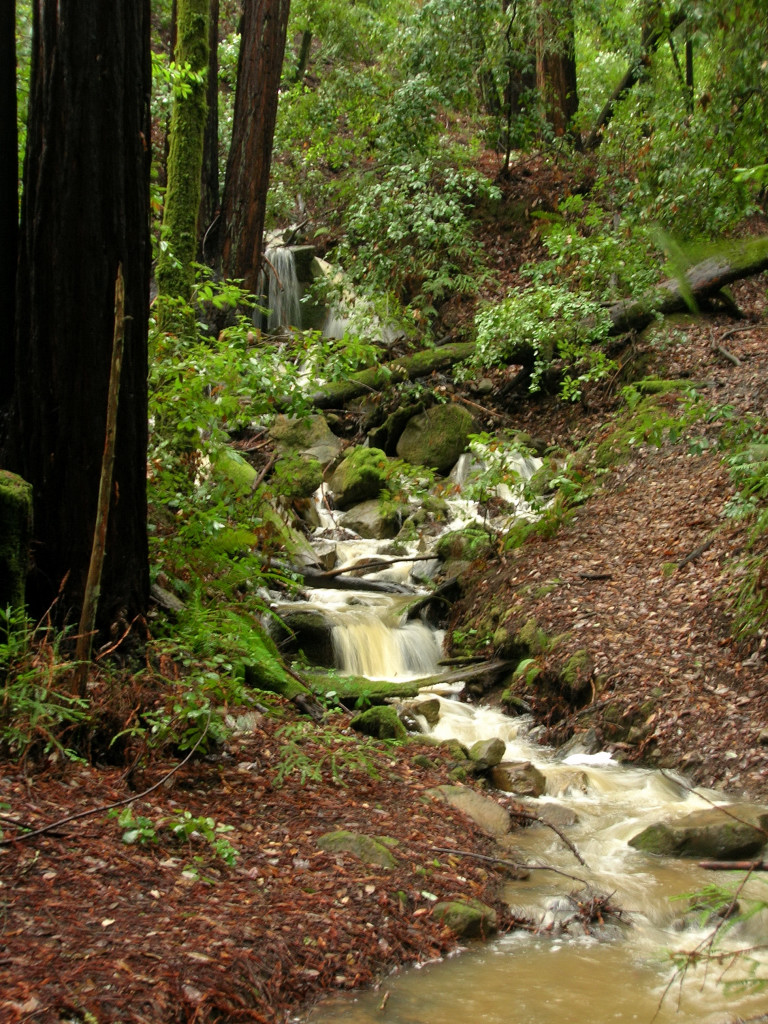 Cascading stream in Phleger Estate