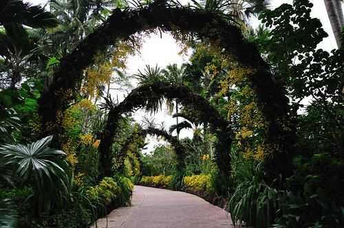 National Orchid Garden (Singapore Botanic Gardens)