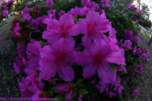 open_flowers