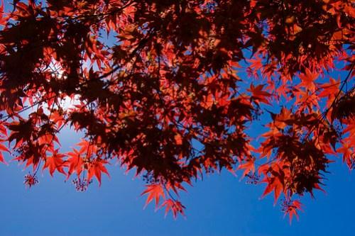 Crystal Springs Rhododendron Garden 003