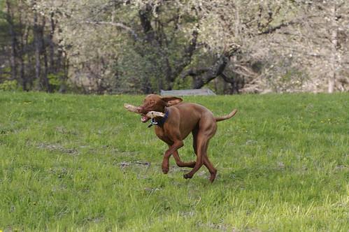 Gryfe running 1
