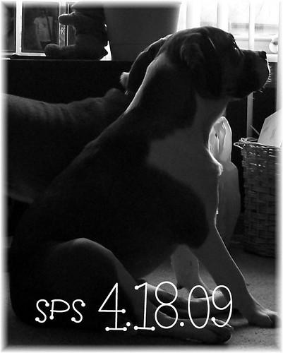 sps 4.19.09