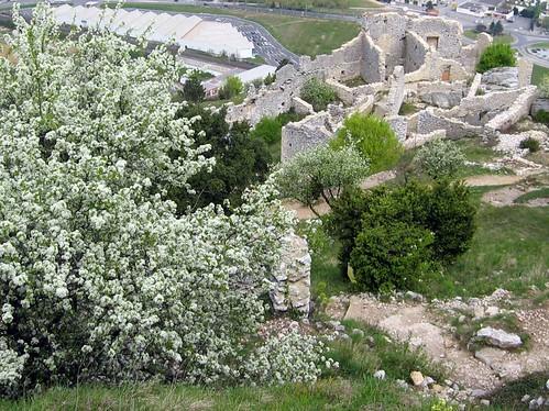 Flowering tree in the ruins.