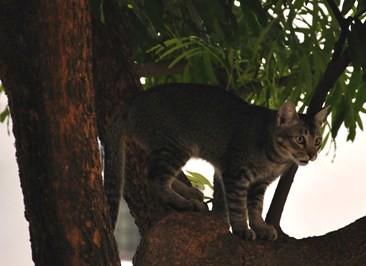 Bradley_tree_20090131_001_DSC_0099_01x
