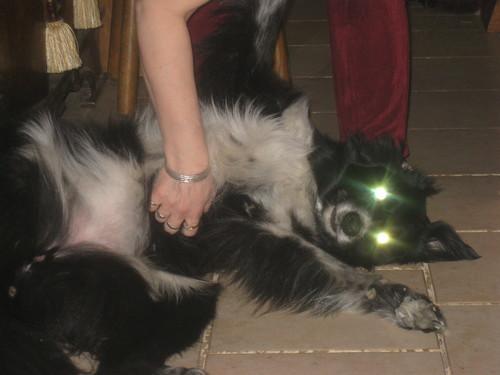 My Demon Dog