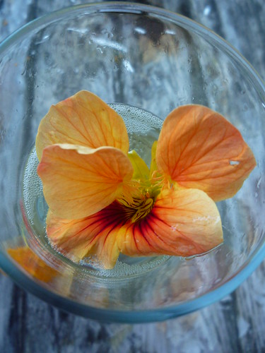 Cava and a Nasturtium by you.