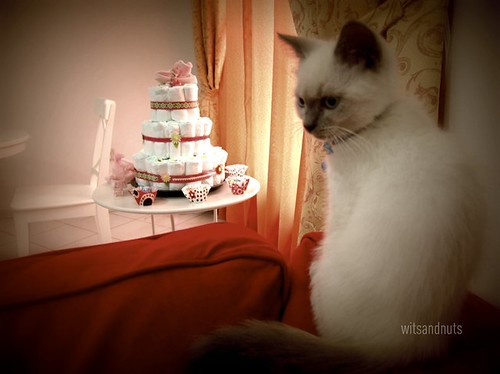 our kittycat curious about the diaper cake