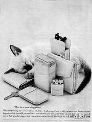 Copie de siamese-kitten-buxton-leather-retro-advertisement-771808