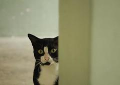 #097 - the peek-a-boo cat
