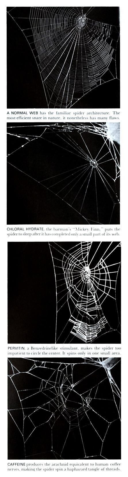 Drunken Spiders