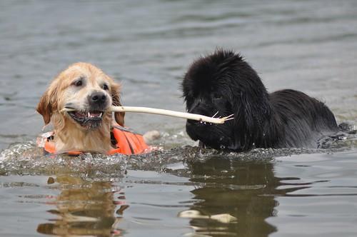 My stick!
