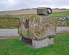 Mankinholes sheep