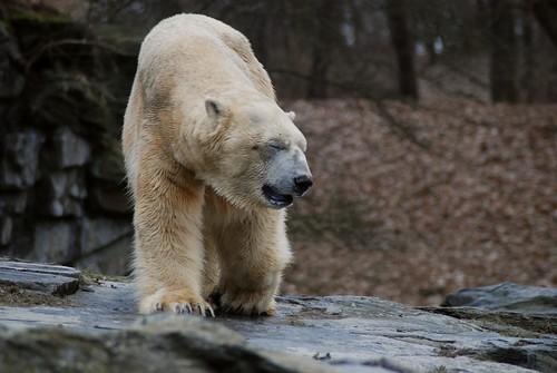 Troll im Tierpark Friedrichsfelde