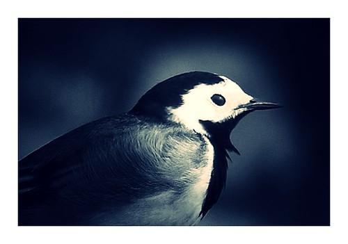 freebird2