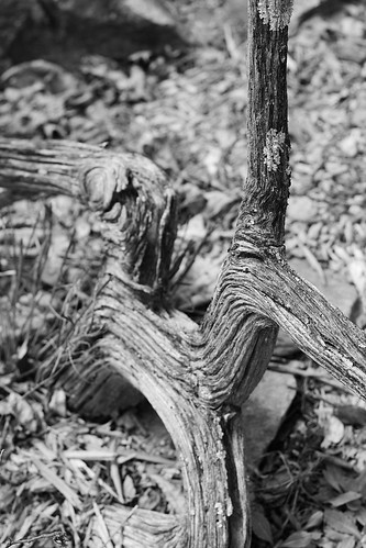 Log in black and white