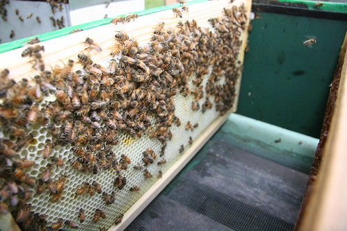 frame in the hive