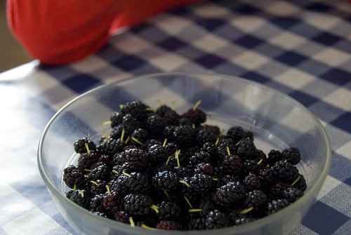 The mulberries