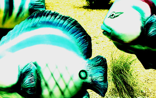 X-Pro Fish. (Fuji Velvia 50 — Cross-Processed. Nikon F100. Epson V500.)