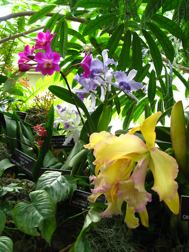 gathering of orchids - us botanic garden
