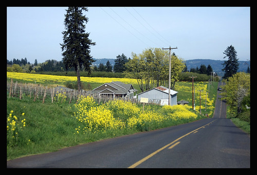 On our mini trek to Scott Paul Winery in the Willamette Valley, OR.