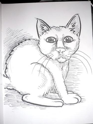 marr-cat