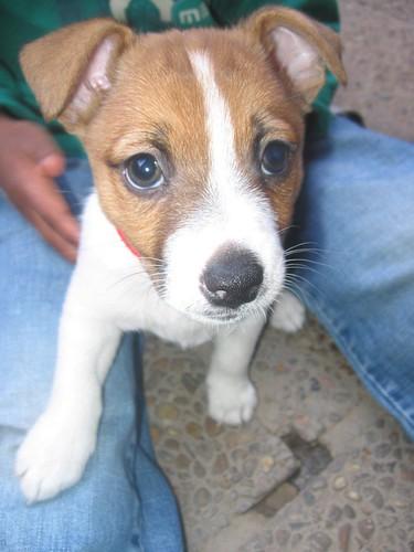 mister puppy