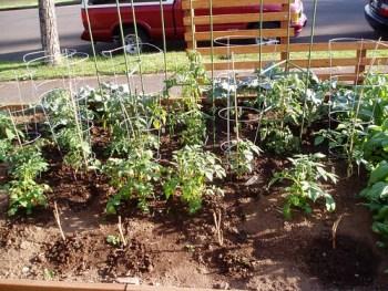Tomatoes & Potatoes