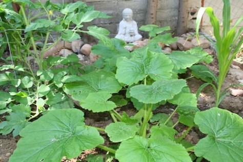 09 garden (terrace)