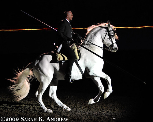 Matt McLaughlin and his Andalusian stallion, Pecos