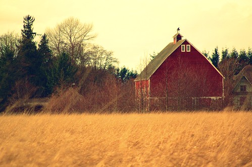Whatcom County Farm