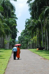 17 - A monk walks with his friend in the Kandy Botanical Gardens