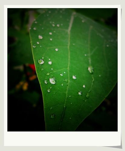 绿色 by lulu.d 泪钻lulu