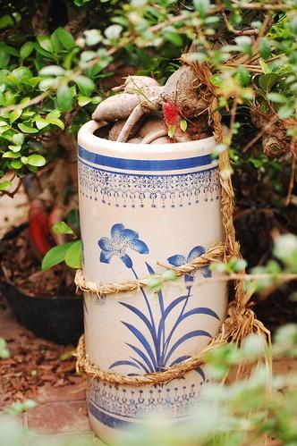 At the Bonsai Garden Shop in Singapore's Beauty World