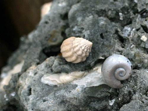 Fossil-Shells