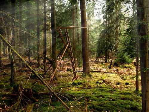 """light, trees & brushwood""-show"