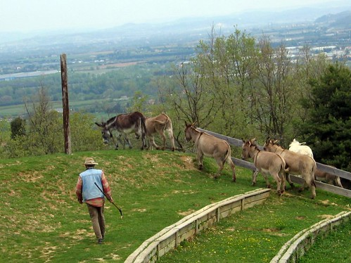 A shepherd herds donkeys at the ampitheater.