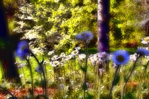 Impressions of a Spring Meadow