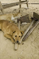 AERA Dogs #1