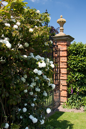 Packwood House roses